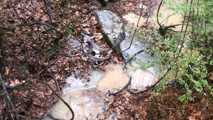 Chilton County Litter Agent Libby Ratliff said she recently found several deer carcasses dumped in a creek located near County Road 116 and a creek off County Road 341 was filled with litter.