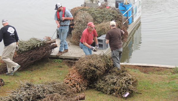 Preparing for the drop: Volunteers prepare Christmas trees to be dropped into Lake Mitchell to serve as fish habitats. (Photos by Peggy Bullard)