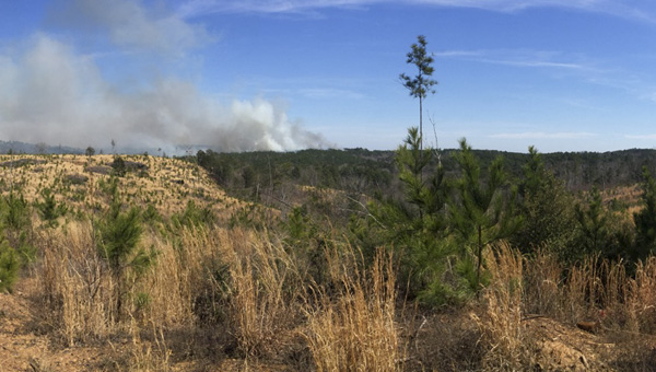 The Talladega National Forest, Oakmulgee District conducted a prescribed burn on Monday. The area of the burn was on Highway 183 in Chilton County, 4 miles southeast of Maplesville.